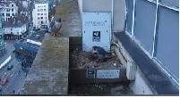 Peregrine Falcons nesting at NTU