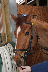 Garmin Edge 500 GPS unit on horse at Brackenhurst